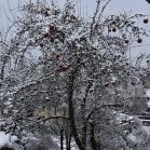 První sníh 2021-01-07 011