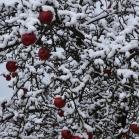 První sníh 2021-01-07 012