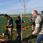 Výsadba ovocných stromů 2019-10-27 058