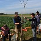 Výsadba ovocných stromů 2019-10-27 060